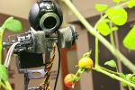 The Distributed Robotic Garden